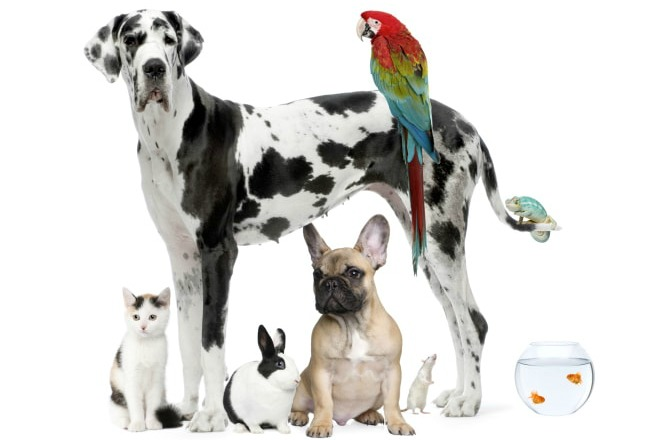 Should You Allow Pets in Your Rental Property in Prince George's County