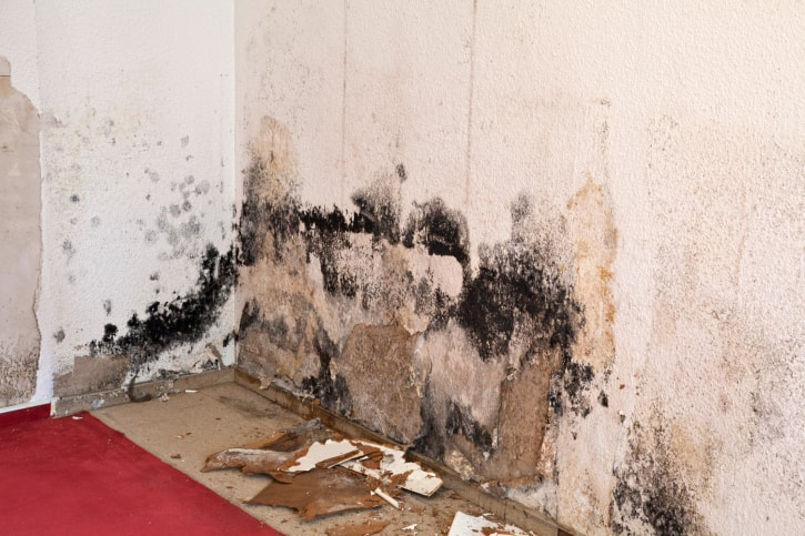 What Landlords Need to Know about Mold in Rental Properties