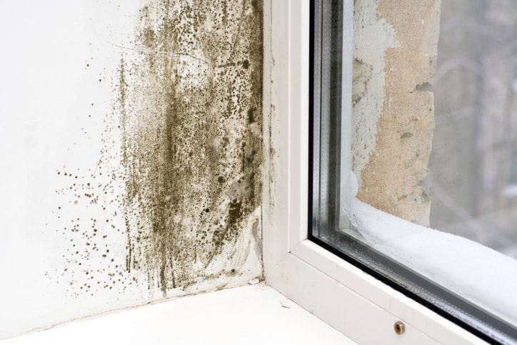 Mold in Anne Arundel County Rental Home