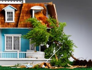 house-damaged-tree