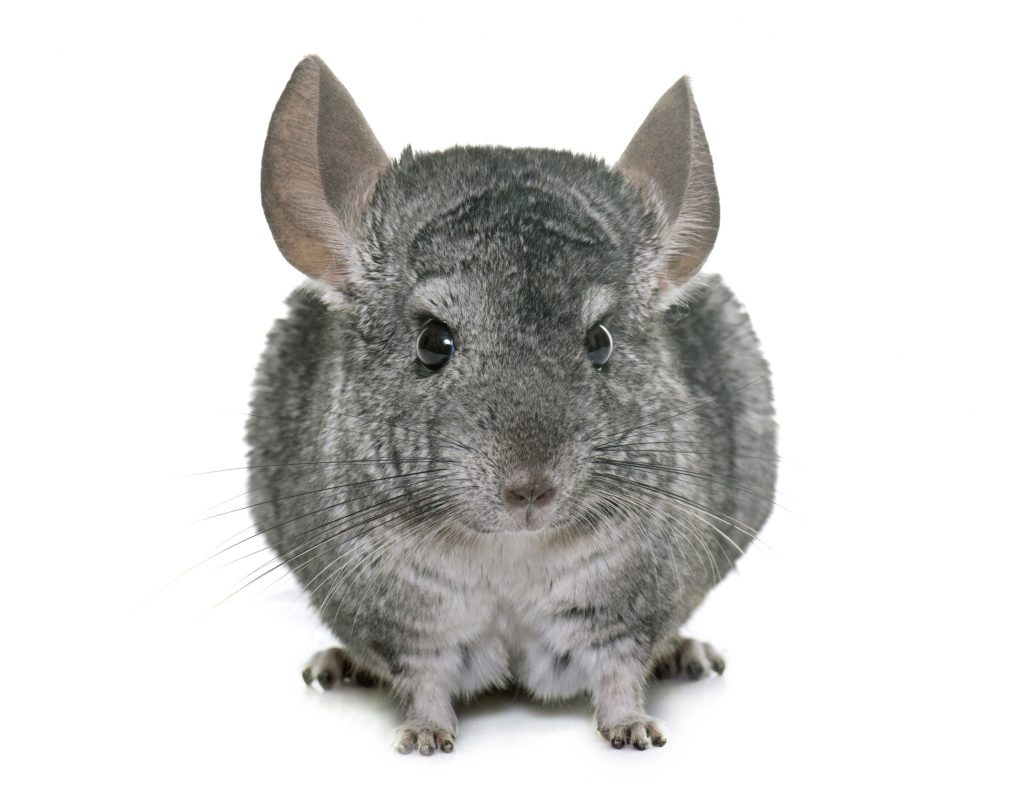 ask-your-maryland-property-management-company-chincillas