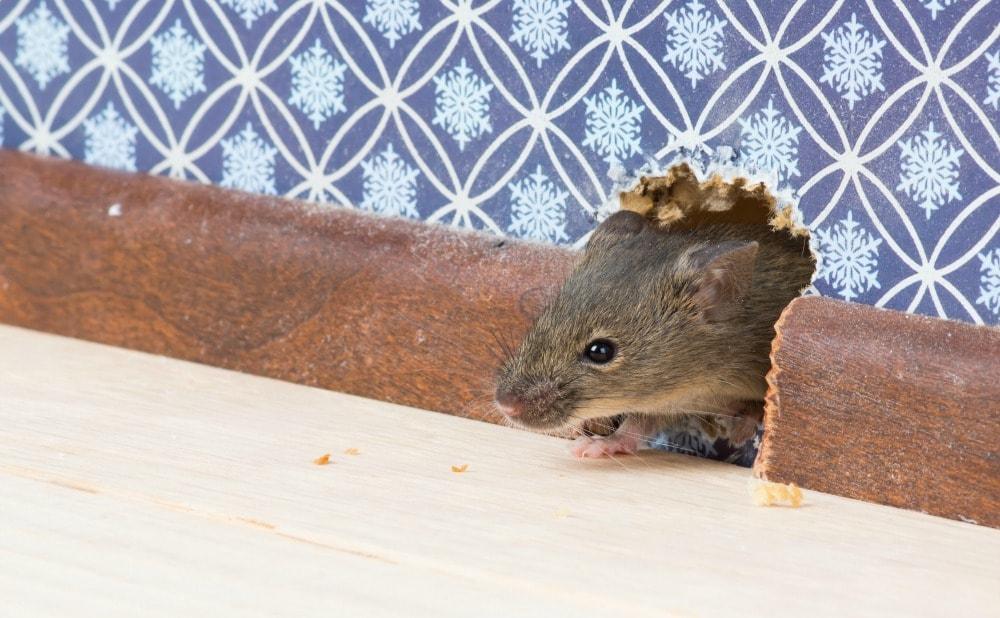 pest-control-howard-county-rental-property