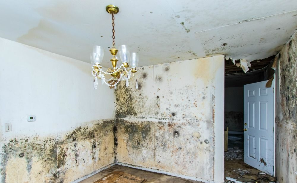 how-prevent-mold-montgomery-county-rental-property