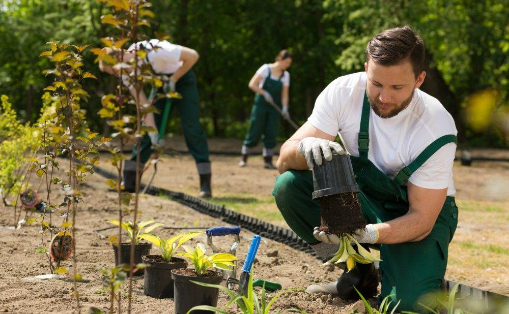 Lawn Seeding Philadelphia Rental Property Landscaping