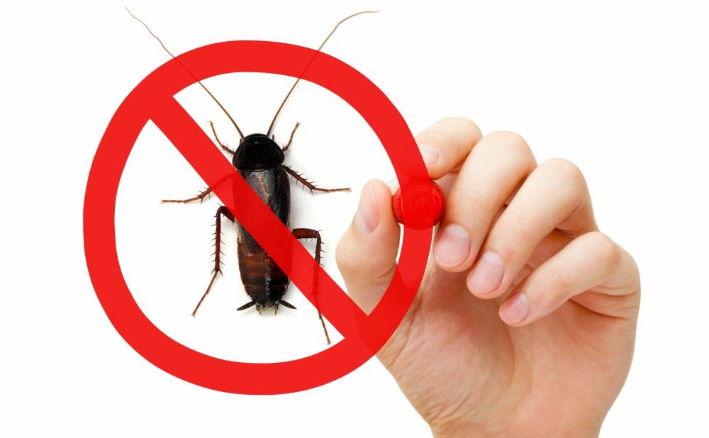 Controlling Pest Problems Philly