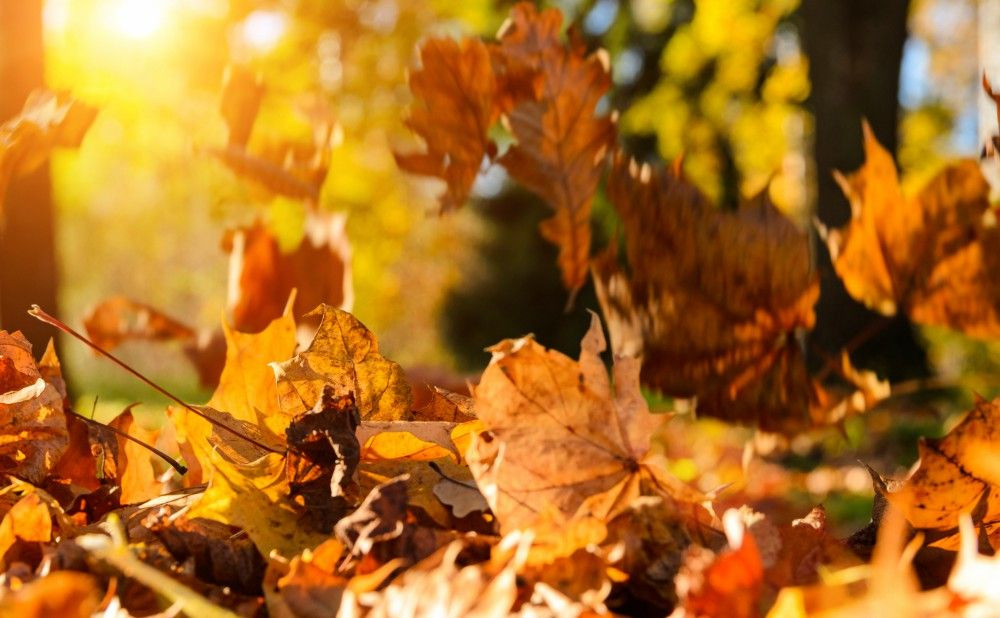 Fall Maintenance Tips for Your Abington Rental Property