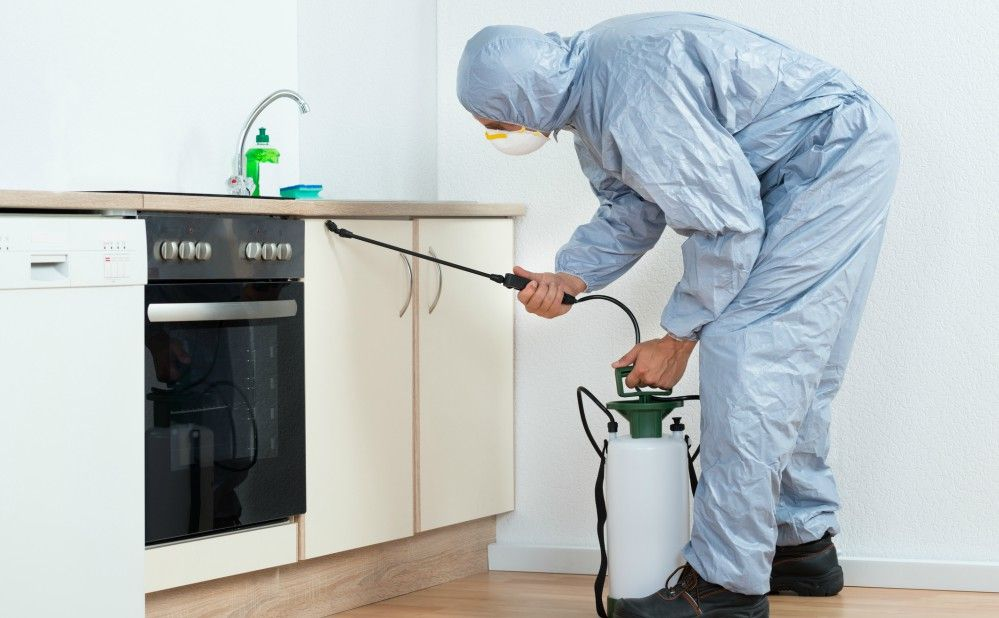 Hiring Pest Control Company in Philly