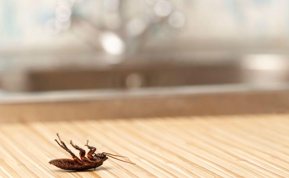 Pest Control in Philadelphia