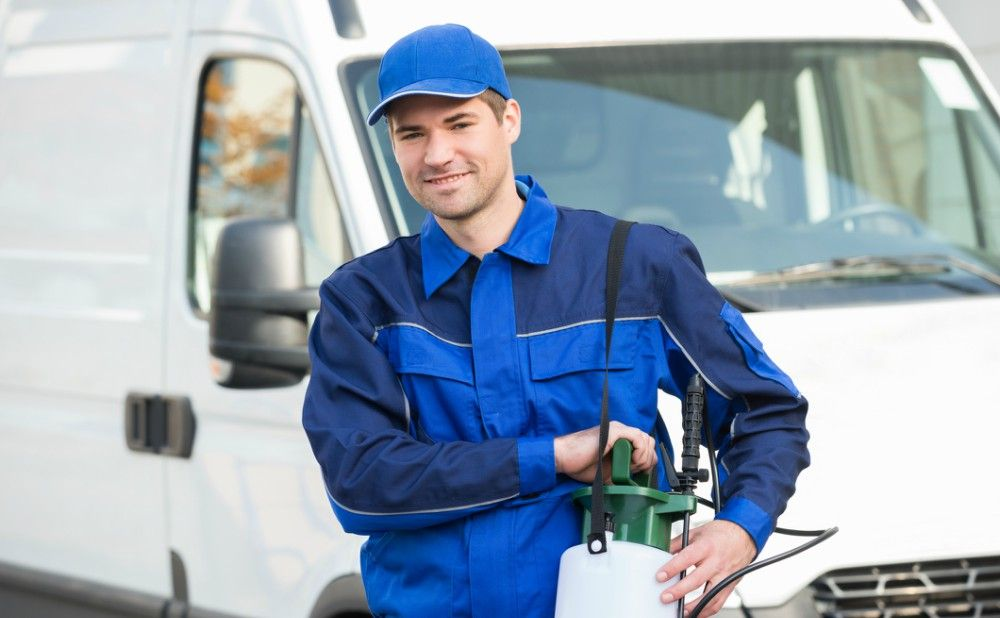 Top 10 Pest Control Companies In Philly