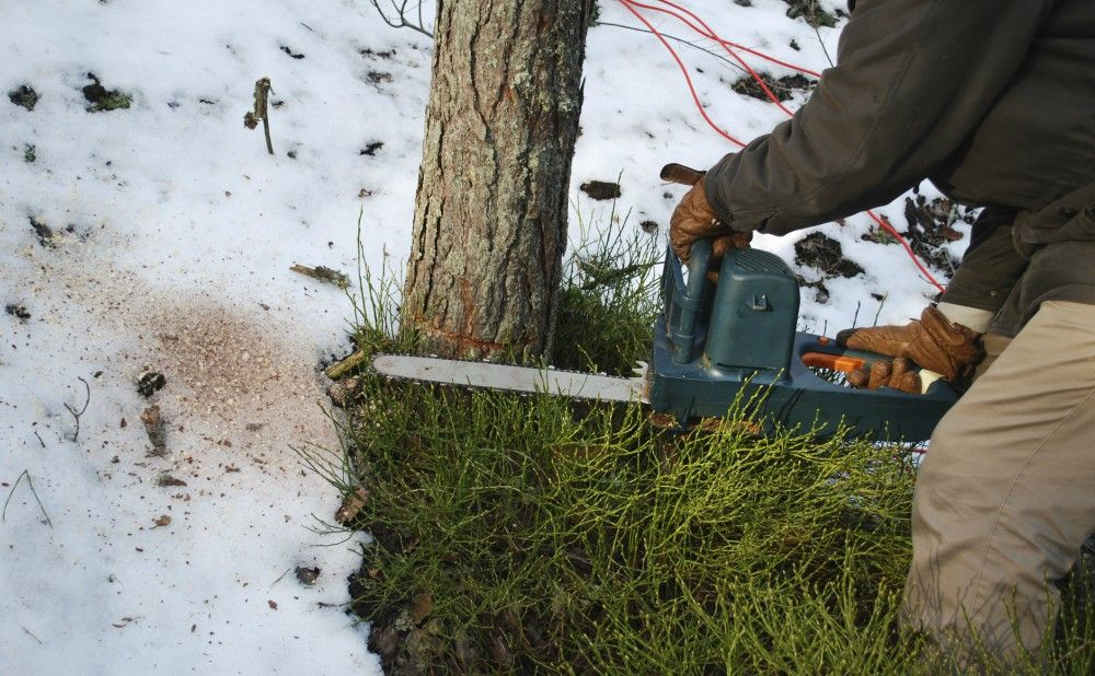 Tree Cutting and Trimming Is Better for Professionals To Do