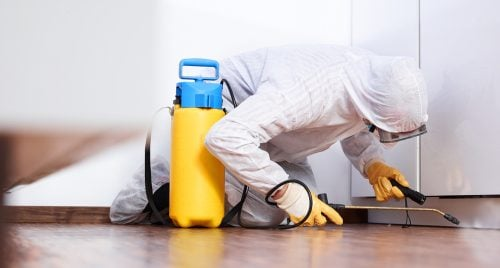 How to Manage Pest Control for Your Montgomery County Property