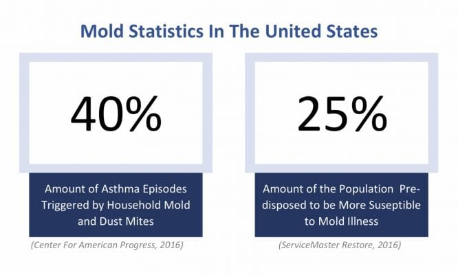 What Are The Health Effects of Toxic Mold Exposure