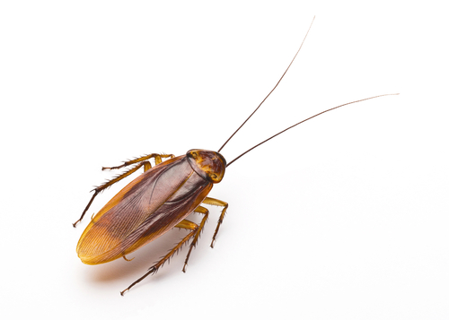 How to Deal with a Pest Infestation According to a Camp Hill Property Management Company