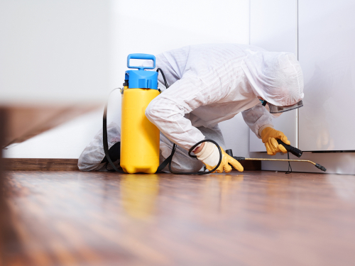 How to Treat and Prevent Pest Infestations