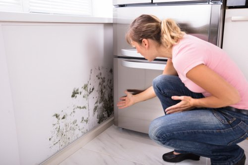 Is It Mold? Contact Your Rental Home Management in Washington DC!