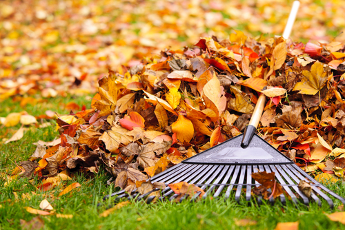 Easy Fall Landscaping Tips and Preventive Measures for Rental Properties