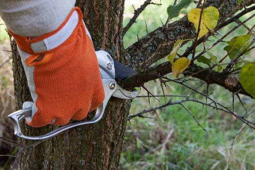 Trim Shrubs and Cut Back Trees