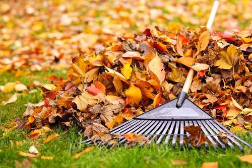 Fall and Winter Yard Maintenance Tips