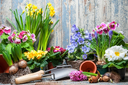 Rental Landscaping Tips To Boost Curb Appeal for Spring