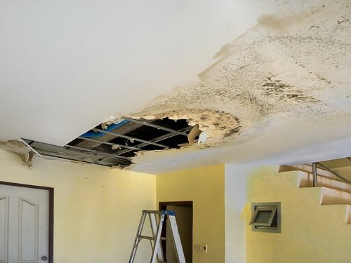 Tips for Preventing Mold Growth